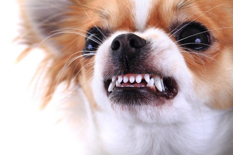 Small Dogs Bite Legal Case