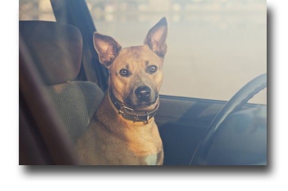 If facing charges of Cruelty to Animals in Denver, contact a Cruelty to Animals lawyer at the O'Malley Law Office.