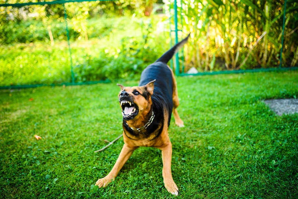 Contact the Dog's Owner and Insurance Carrier