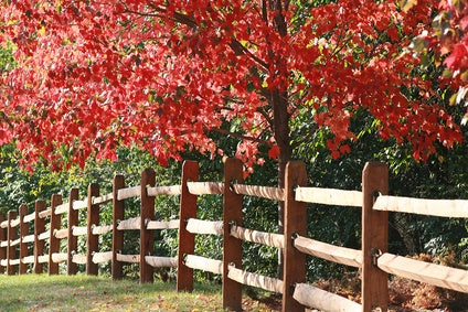 A border fence with overhanging tree
