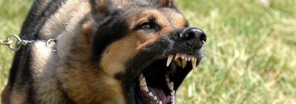Large dog snarling