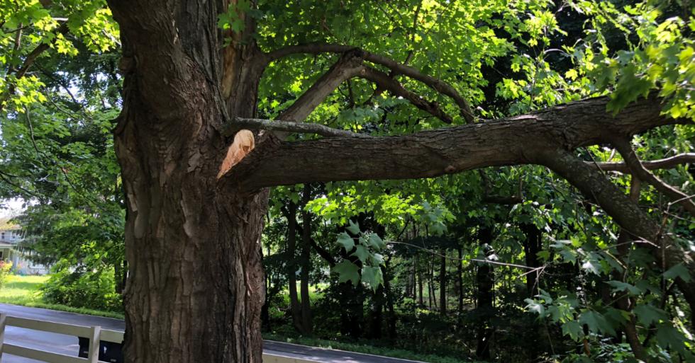 tree-trespass