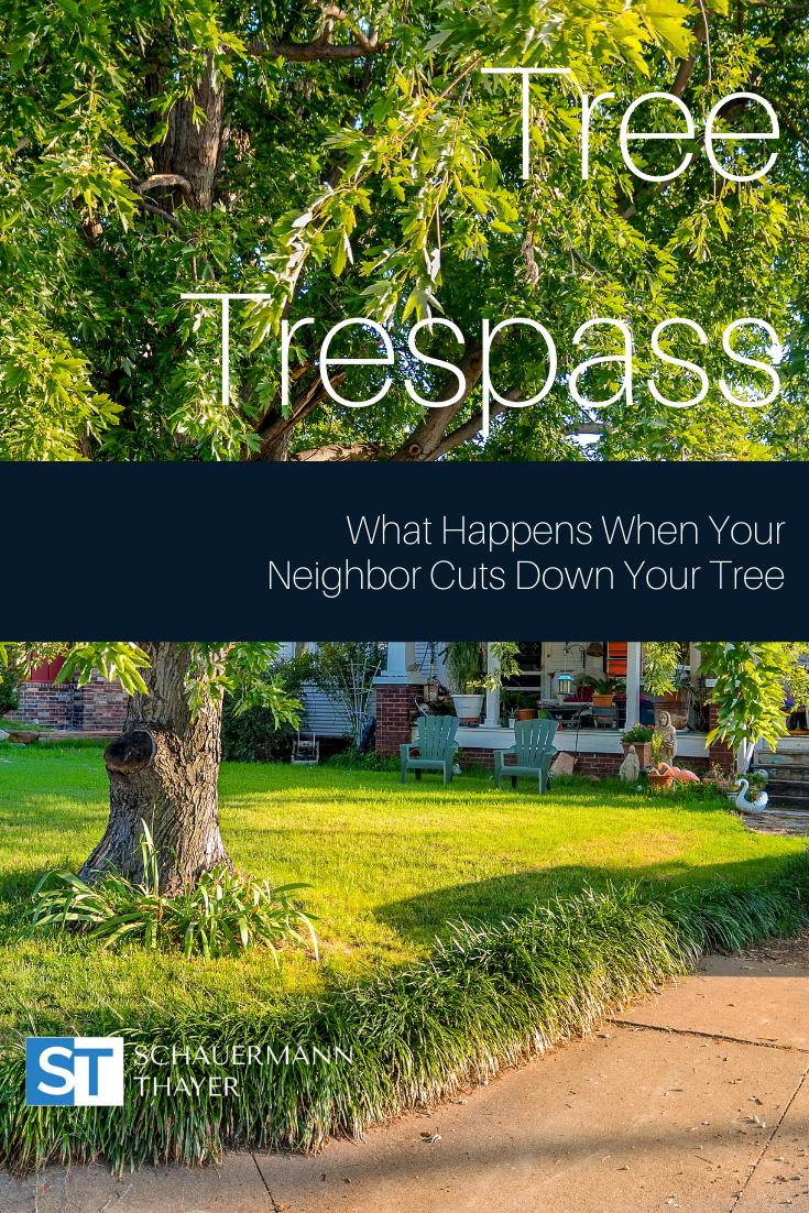 tree_trespassing