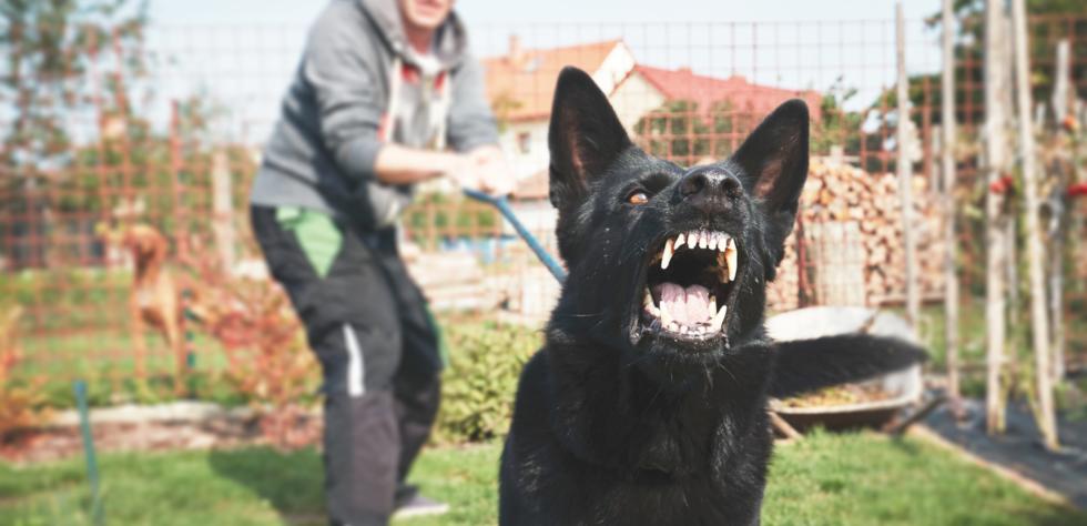 dog_bites_and_insurance